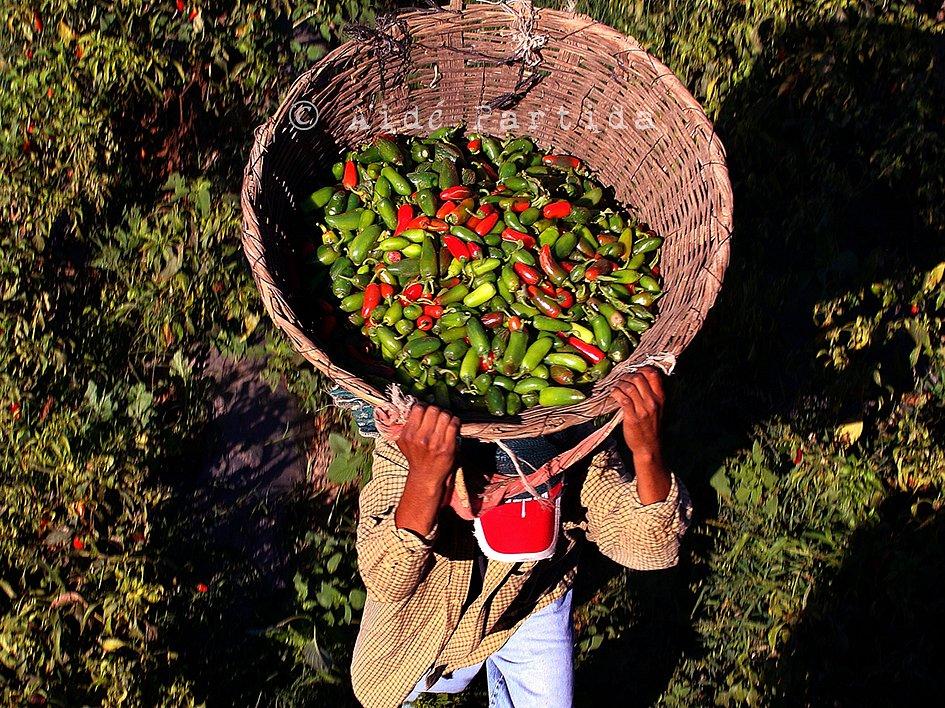 11-Petaca-multicolor-delaserieSabeaMexico.jpg